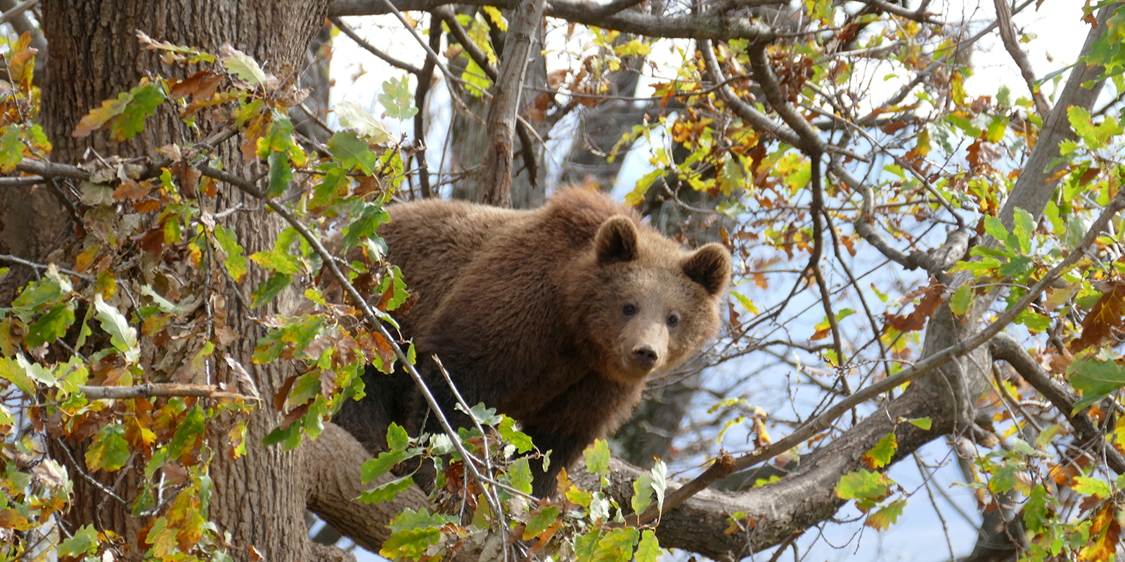 Bear sanctuary in Romania: sufficient space and possibilities of withdrawal for rescued brown bears