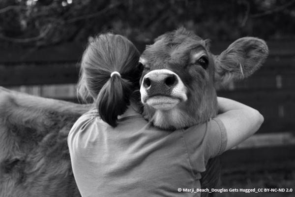 Frau umarmt Kuh
