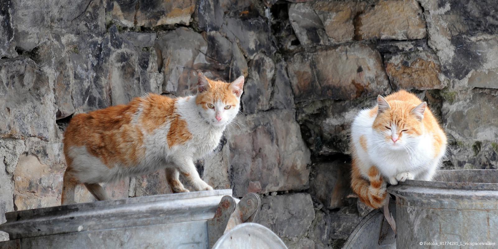 Katzenrettung in Bulgarien: In Plowdiw leben Schätzungen zufolge rund 10.000 Streunerkatzen