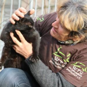 Katzenrettung in Bulgarien
