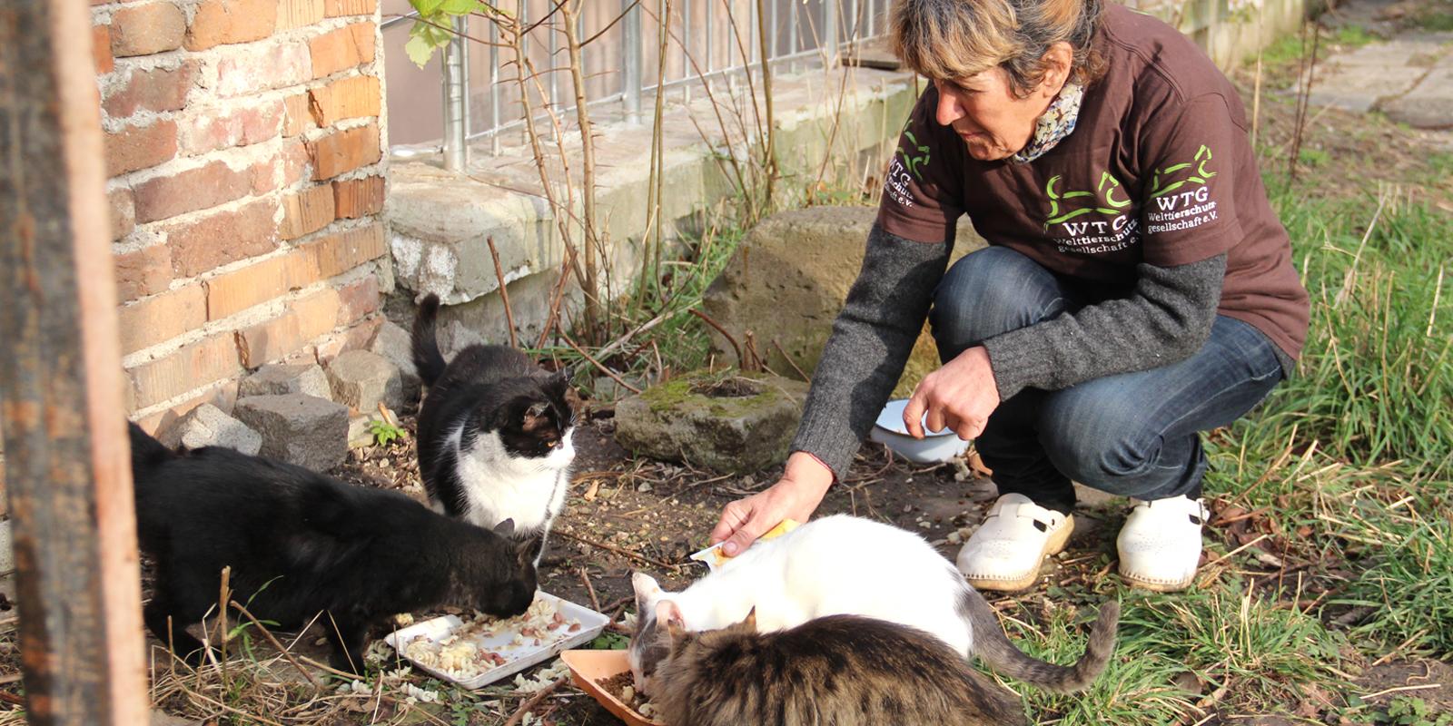 Viele Straßenkatzen sind krank und unterernährt