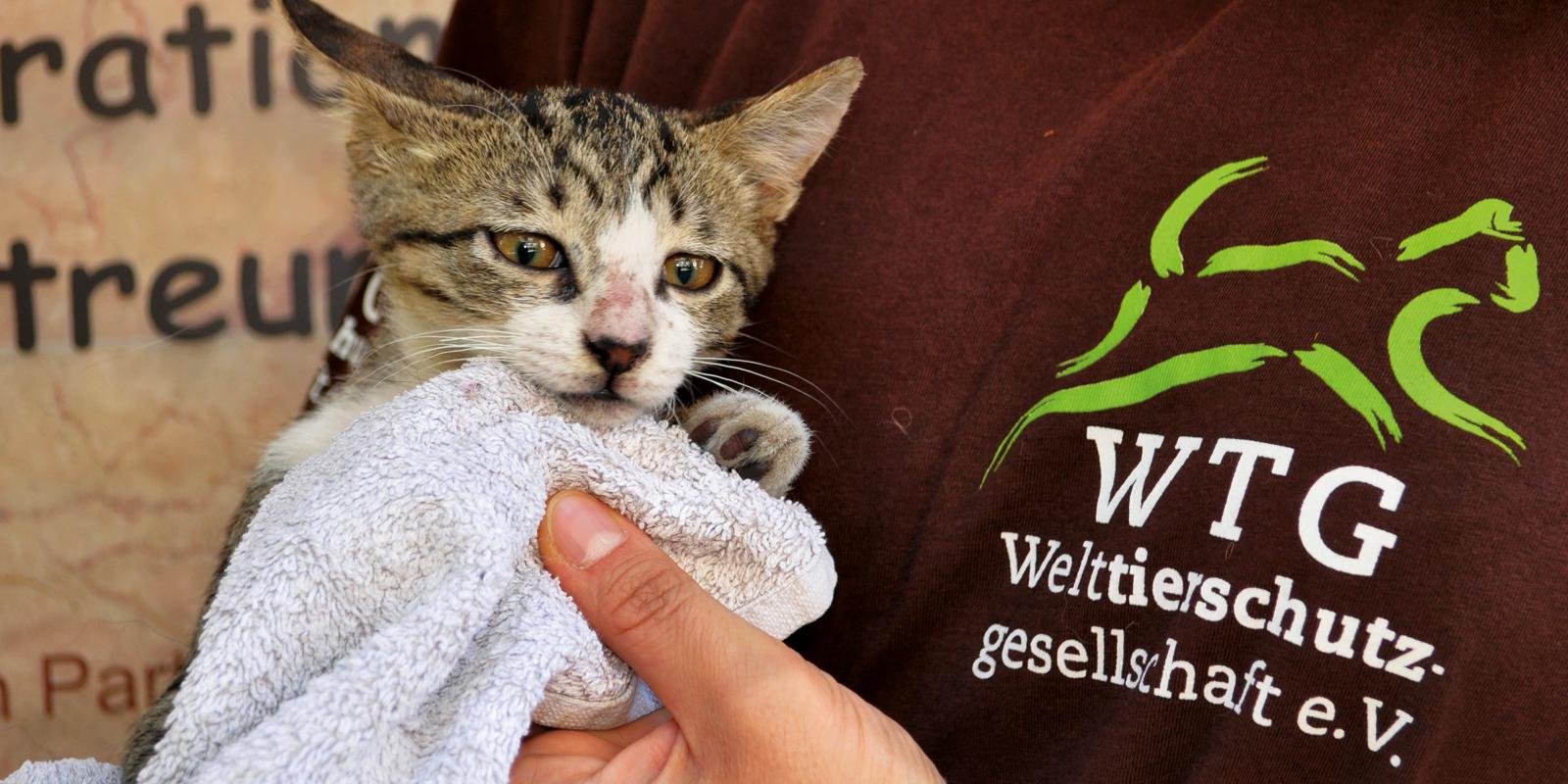In der Klinik werden die Straßenkatzen kastriert und versorgt