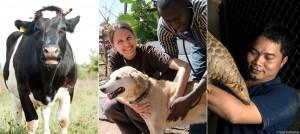 die-Welttierschutzgesellschaft-stellt-sich-vor-slider-960x430