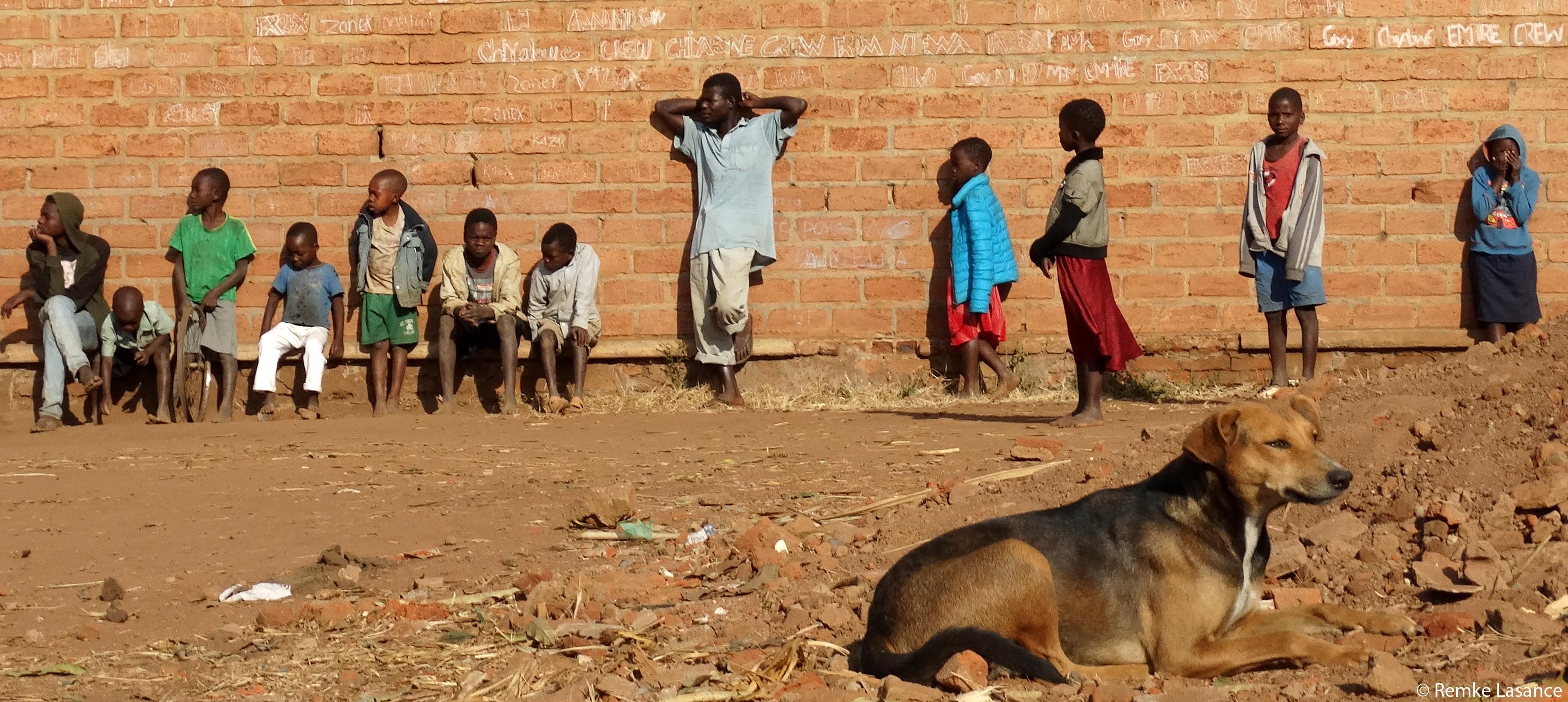 Die Armut in Malawi betrifft auch die Tiere