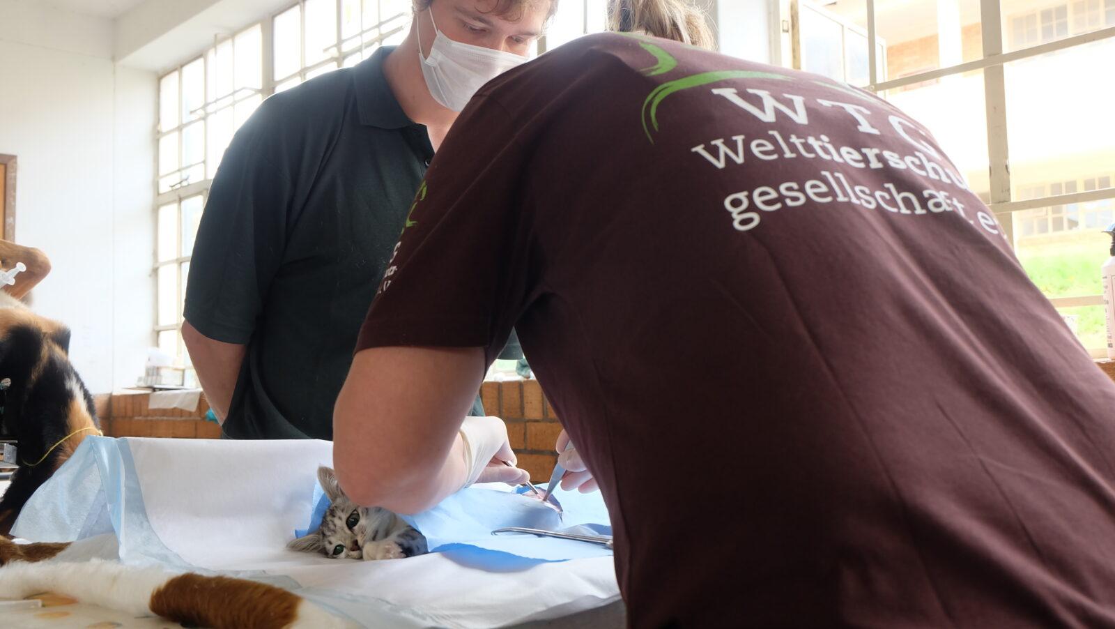 Tiermedizinstudenten der Universität Pretoria, begleiten unseren lokalen Partner während ihres letzten Studienjahres und sammeln wertvolle praktische Erfahrungen.