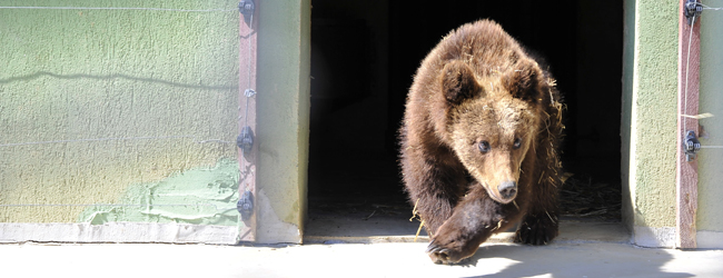 Paddington im Bärenschutzzentrum
