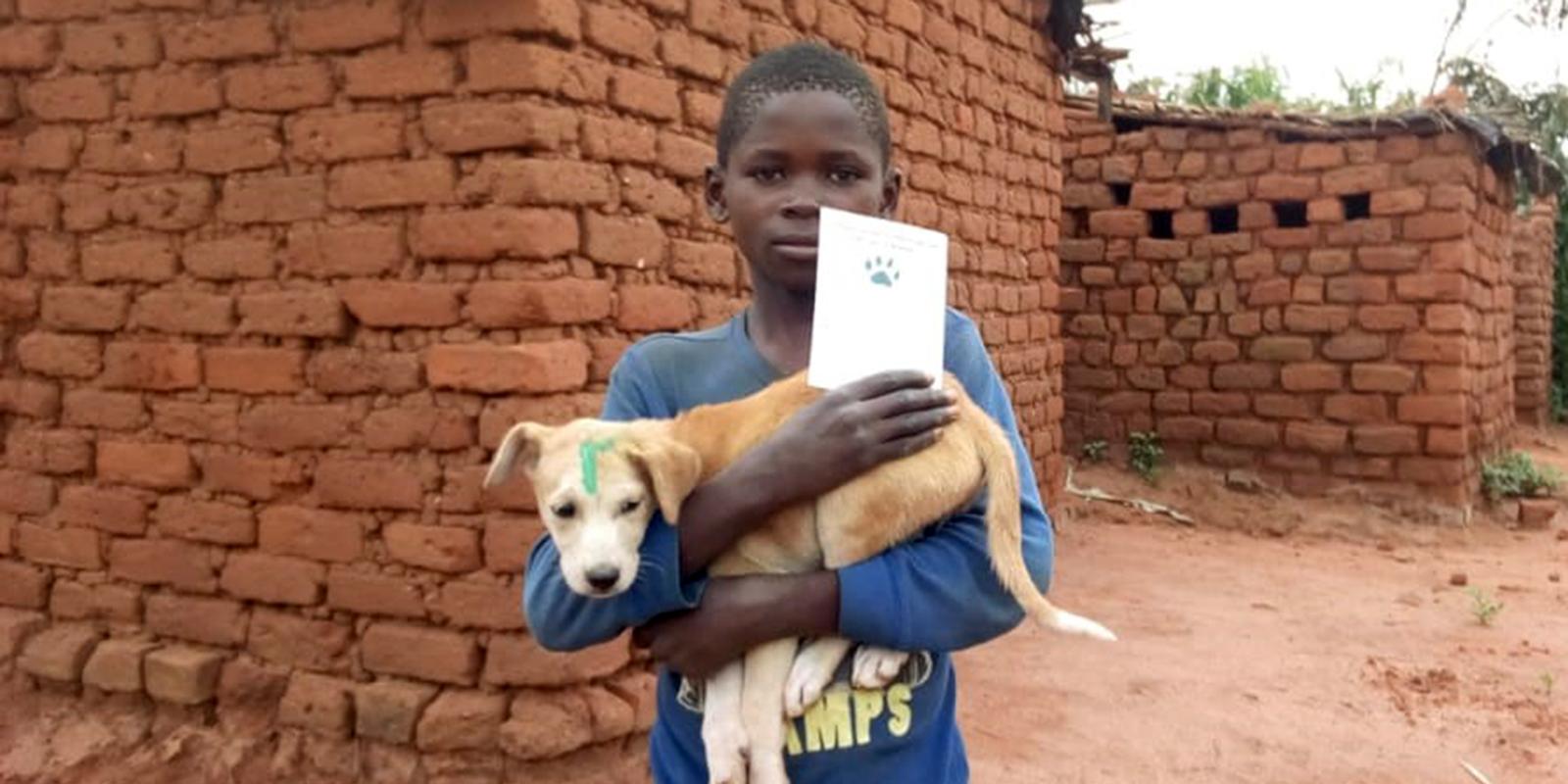 Insbesondere Kinder kümmern sich um die Tiere. Auch für sie stellt Tollwut eine Gefahr dar.
