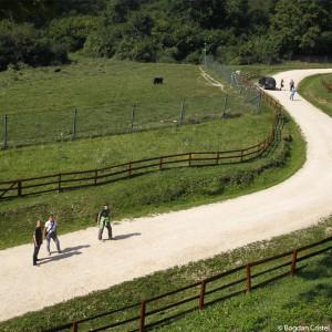 welttierschutzgesellschaft-rumänien-braunbären-325x325-02