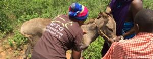 mawo-tansania-esel-behandlung-tierärzte-weltweit-ausbildung-650x250