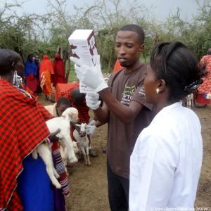 mawo-tansania-ziegen-tierärzte-weltweit-ausbildung-325x325
