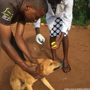 tansania-hund-impfung-welttierschutzgesellschaft-325x325