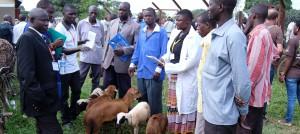 tieraerzte-weltweit-in-uganda-tiermarkt-slider-960x430