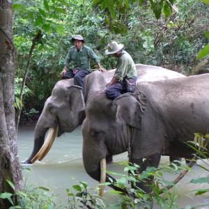 elefanten-patrouille-sumatra-325x325