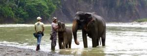 elefanten-worldwildlifeday-elephants-01-650x250