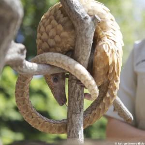 schuppentier-zoo--pangolin-wilderei-325x325