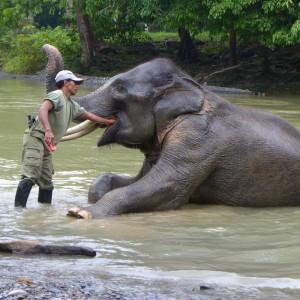 sumatra-elefant-im-wasser-mahout-325x325