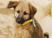 website-patenschaft-streunerhunde