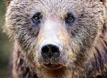 website-patenschaft-wildtiere