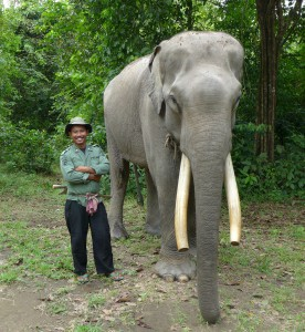 elefanten-sumatra-tierschutz-mahout