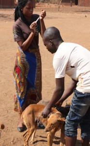malawi-impfen-gegen-tollwut-afrika-1-325x325