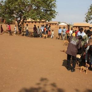 malawi-impfen-gegen-tollwut-afrika-325x325
