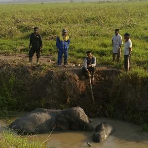 elefanten-rettung-sumatra