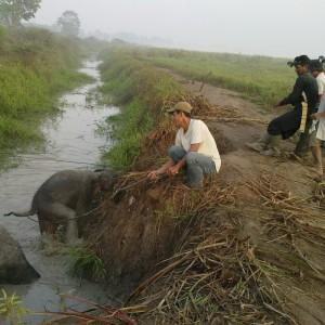 elefantenkalb-rettung-sumatra