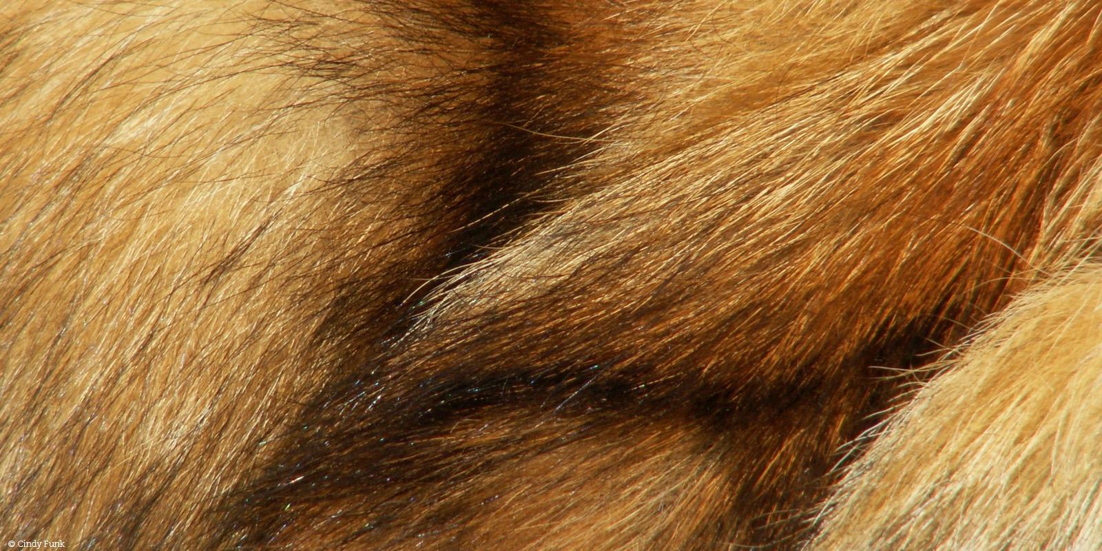 Pelz vom Fuchs