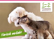 hund_katze-tierisch-verliebt