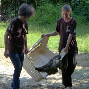 auswilderung-faultier-surinam-welttierschutzgesellschaft-325x325