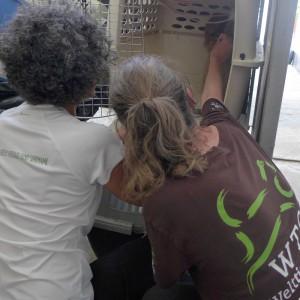 faultier-sloth-save-rescue-rettung-surinam-325x325