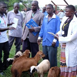 tiermarkt-uganda-tierschutz-ziegen-tieraerzte-afrika-325x325