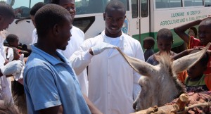 15_vets-united-tieraerzte-weltweit-mobile-clinic-esel-donkey-1