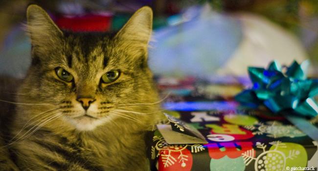 Charity-Shopping: Online einkaufen und Gutes tun. Zum Beispiel für den Tierschutz.