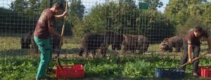 fuetterung-baeren-braunbaeren-rumaenien-welttierschutzgesellschaft