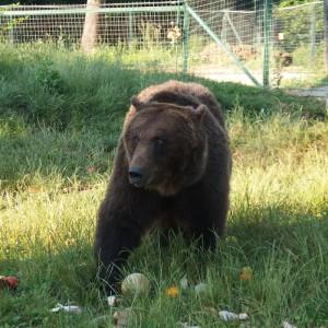 marinel-mogli-libearty-bear-sanctuary-rumaenien-baerenschutz-325x325