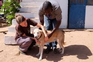 tieraerzte-weltweit-tierarzt-afrika-tierschutz-hilfe