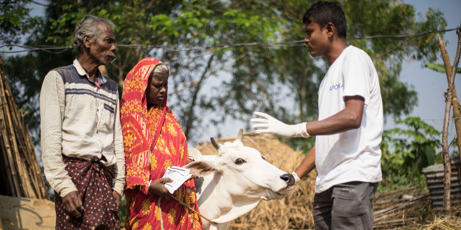 Rinder in einem indischen Dorf