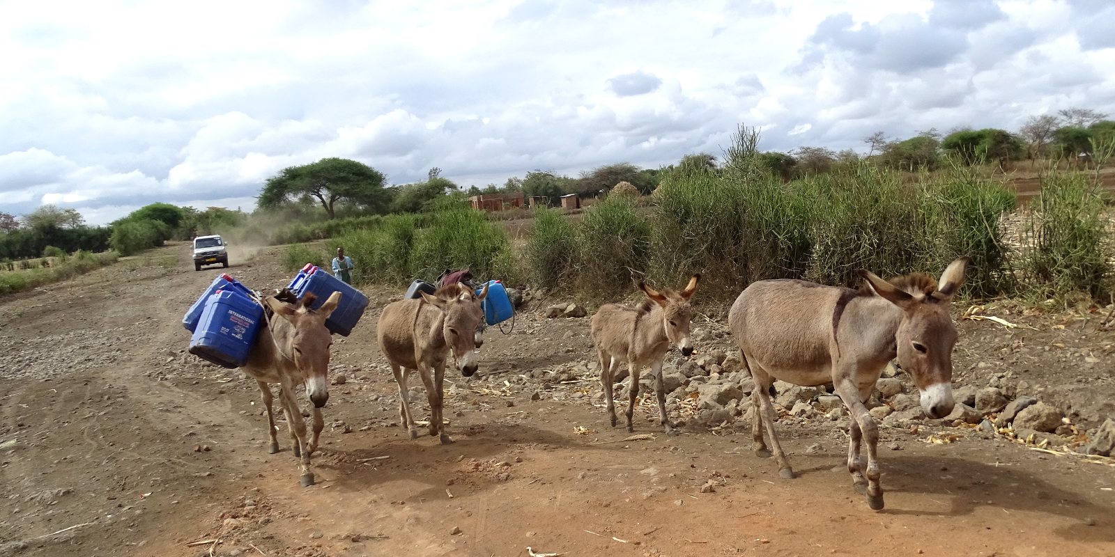 Many donkeys in Tanzania are killed for their skin