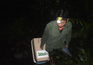 schuppentiere-vietnam-welttierschutzgesellschaft-pangolin-rescue-1