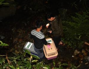 schuppentiere-vietnam-welttierschutzgesellschaft-pangolin-rescue-2