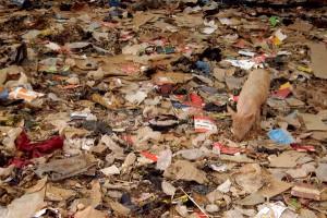 schwein-muell-abfall-tierschutz-welttierschutzgesellschaft