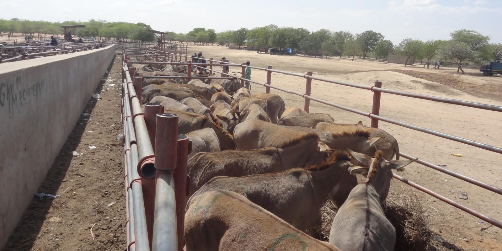 Tiermärkte in Tansania