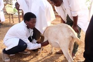 tieraerzte weltweit-tierschutz-malawi-studenten