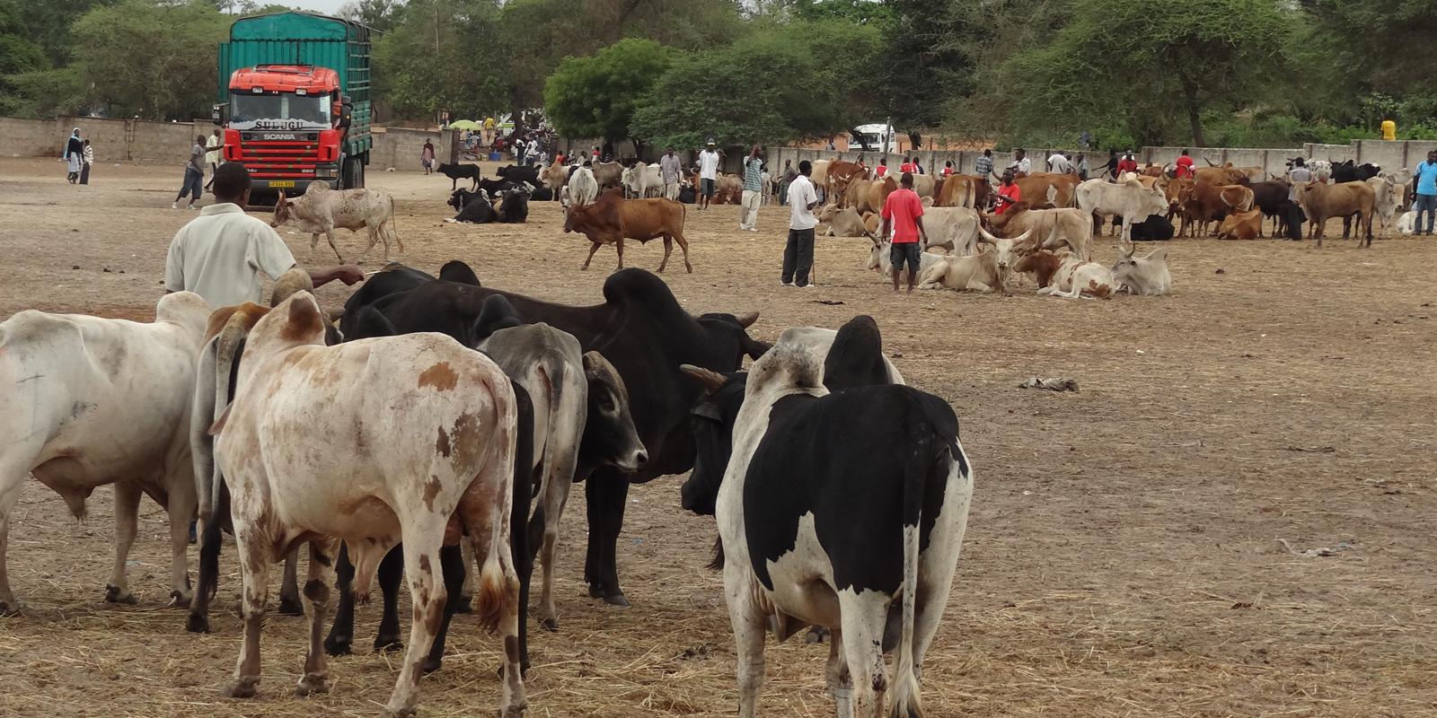 Livestock markets in Tanzania