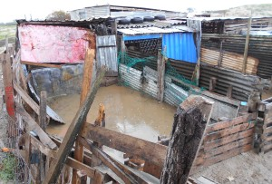 tierschutz-tierhaltung-stall-afrika-welttierschutzgesellschaft