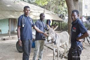 gambia-donkey-trust-tierschutz-welttierschutzgesellschaft
