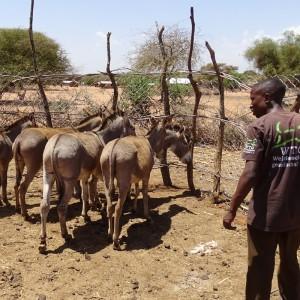 soforthilfe-tansania-esel-gehege-bauen-tierhilfe-eselhilfe-tierschutz