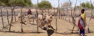 soforthilfe-tansania-esel-gehege-bauen-tierhilfe-tierschutz-650x250