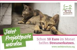 Freianzeige_Streunerkatzen_Welttierschutzgesellschaft